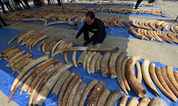 рекордная партия контрафакта слоновой кости